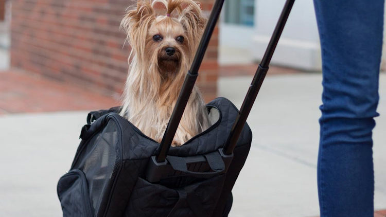 4-in-1 Snoozer Carrier Perfect for Traveling with your Pet