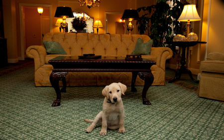 Jet Set Pet: Nashville's Hermitage Hotel Named America's Best Pet-Friendly Hotel
