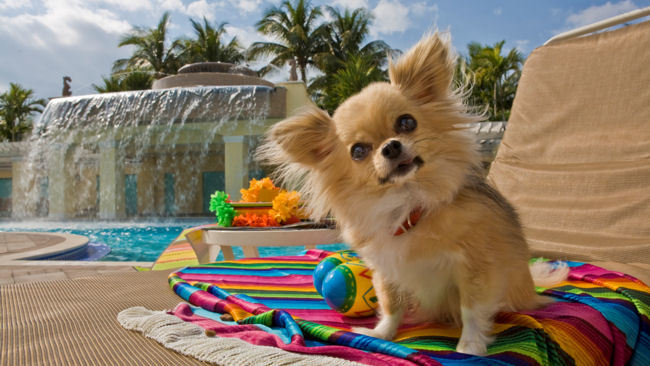 Celebrate the Dog Days of Summer with Tail-Wagging Travel Offerings