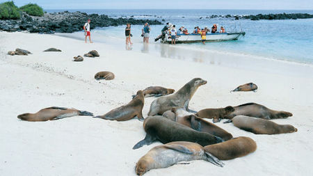 Discover the Galapagos with Aurora Expeditions