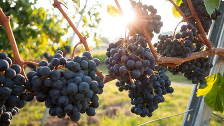 10 Great Grape Stomps for California Wine Month