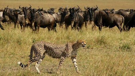 Take Your Family to Witness Africa's Great Migration