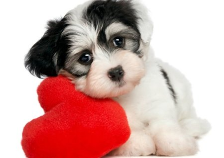 Canine Be Mine Valentine's Package at Topnotch Resort
