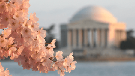 Where to see the Cherry Blossoms this Spring