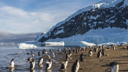Hurtigruten Offers Free Flights to Antarctica