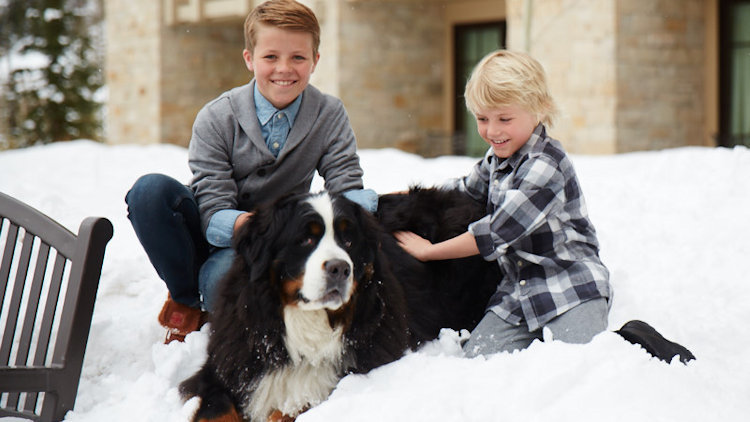 Montage Deer Valley Offers the Perfect Pup-cation Destination