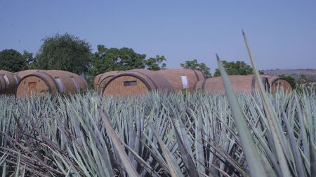 5 Cities Tequila Lovers Must Visit in Mexico's State of Jalisco