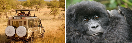 From Elephants to Gorillas with Four Seasons Serengeti