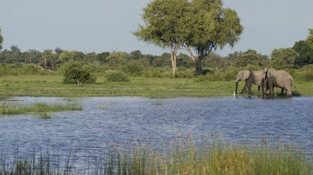 Escape the Winter Chill with Green Season Botswana Safari