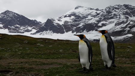 Abercrombie & Kent Expands Cruise Offerings in Antarctica and the Arctic