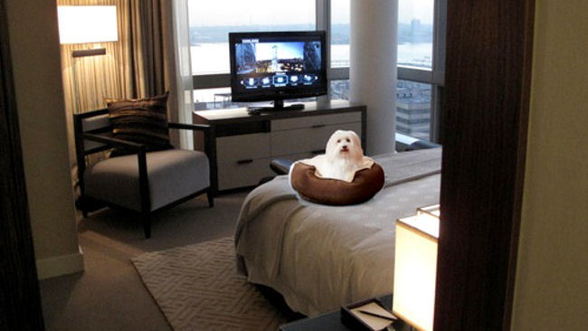 Jet Set Pet: Trump Hotel Collection Introduces Pet Pampering