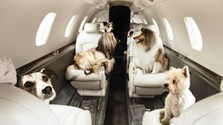 Private Jet Central sees 40% increase in Jet Setting Pets this year