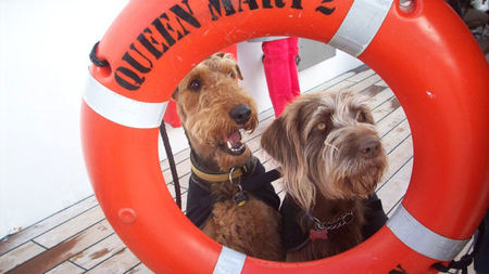 Queen Mary 2: The World's Only Dog-friendly Cruise Liner