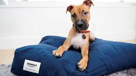 The James Hotels Announces Partnership with Shinola Pets & Local Shelters