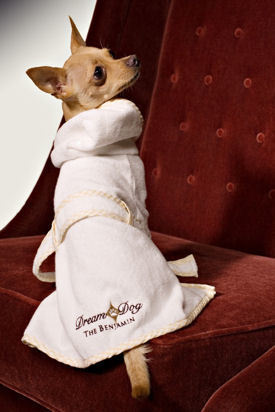 Jet Set Pet: VIP (Very Important Pet) Treatment at New York's Best Pet-Friendly Hotels
