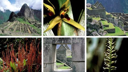 INCA Offers 8-day Wild Orchids of Machu Picchu Tour