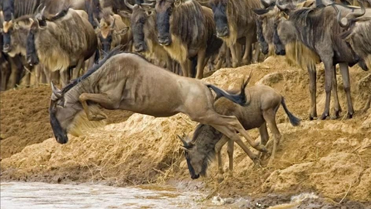Tanzania wildfires likely to affect annual wildebeest migration to Kenya