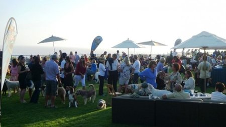 Take Your Pet to Yappy Hour this Summer at The Ritz-Carlton, Laguna Niguel