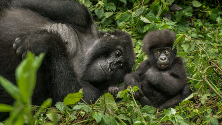 Ultra Luxury Travelers Can Now Visit Rwanda with One&Only Nature Resorts