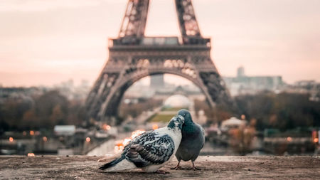 Paris: Love Blooms Eternal in the City of Light