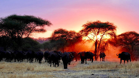 Hemingways Collection Offers Spectacular Double Migration Safari