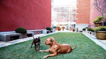 New York's Soho Grand Hotel Unleashes Dog Park