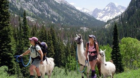 Explore Vail's Backcountry Alongside Llamas This Summer