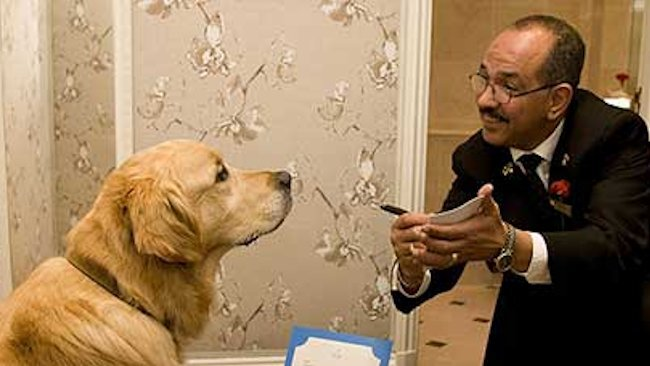 Red Carnation Hotels Celebrate VIPs (Very Important Pets)