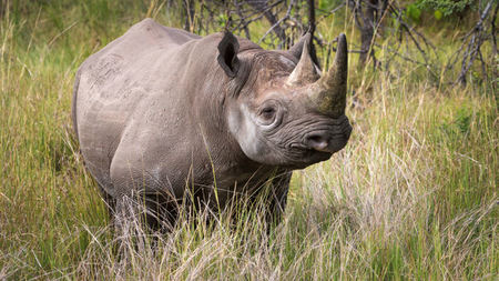 Prince Harry Joins Forces with Wilderness Safaris on Botswana Rhino Project