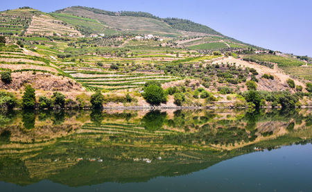 From Water to Wine: A Journey Up The Dramatic Douro River