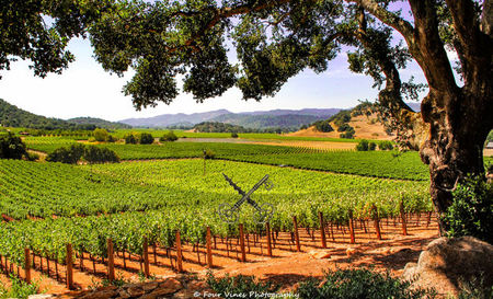 Wine Country Concierge: Exclusive Insider to Napa Valley's Finest