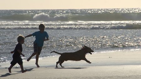 Del Mar, A Top Destination for Pet-Friendly Travel