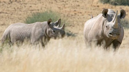 Namibia: In Search of the Desert Rhino