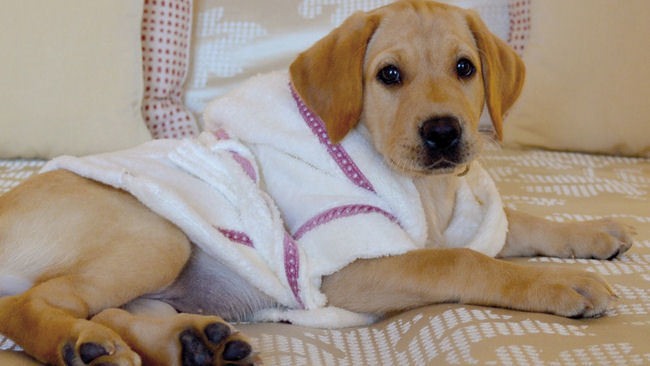 Top Dogs at Belmond Hotels