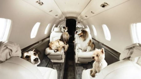 Pets on Jets for National Puppy Day on March 23