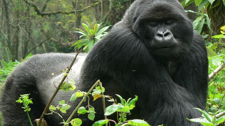 The Best Seasons to See Gorillas in Africa