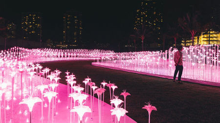 The Light Garden, 1000 Year Bloom, Launches in Honolulu