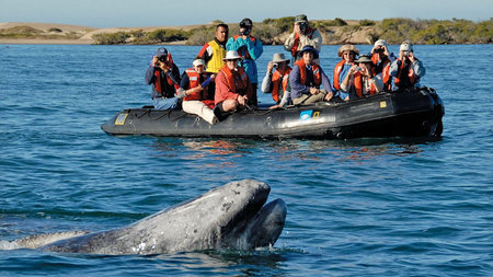Lindblad Expeditions Offers Extraordinary Whale Watching Voyage
