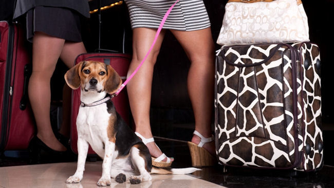 Jet Set Pet: THEhotel at Mandalay Bay Introduces Dog-Friendly Suites