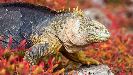 International Expeditions Offers Spring Travelers $1,000 Off On May 30 Galapagos Cruise
