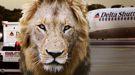 Delta Air Lines Bans Big Game Hunting Trophies