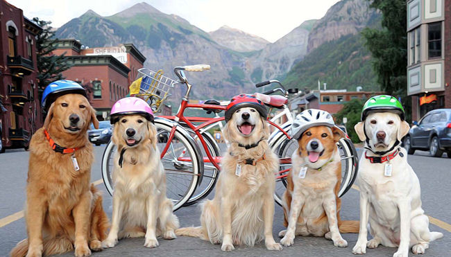 'Best in Show' Alpine Pet Package Offered by The Hotel Telluride