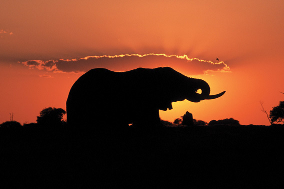 Belmond Savute Elephant Camp - Chobe National Park, Botswana -slide-14