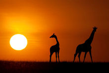 ORYX - Bespoke Luxury Photo Safaris in Africa