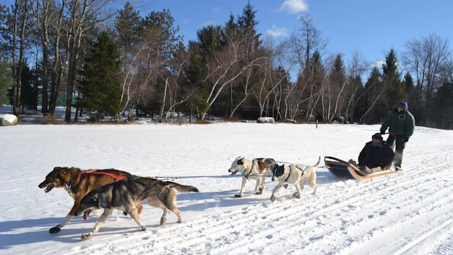 Skytop Lodge sled dogs