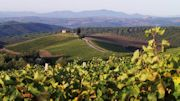 Fall in Tuscany at Castiglion del Bosco: Grapes, Olives, Truffles and more