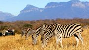 Spring into South Africa with African Travel, Inc.