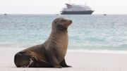 Silversea Launches $199 Air Offer for Galapagos Expedition Cruises
