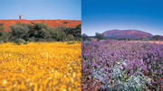 Wildflower Season is in Full Bloom in Western Australia