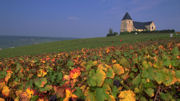 France's Champagne Region Toasted with UNESCO World Heritage Status